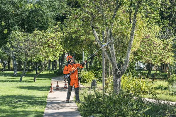 A Guide to Tree Pruning